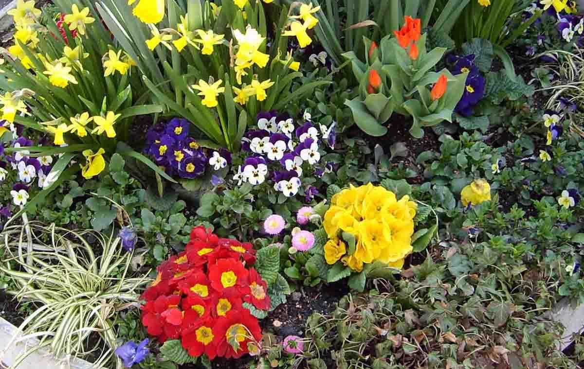 того, какие цветы садить весной фото и название беседке