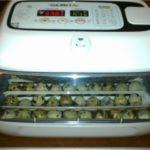 Обзор бытовых инкубаторов