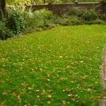 Как правильно подготовить газон к зиме?