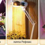 Какими бывают и где используются лампы для растений?