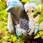 Особенности и преимущества применения азотных удобрений