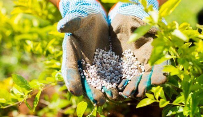 Обогащение-почвы-азотными-удобрениями