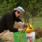 Как, чем и когда удобрять деревья?