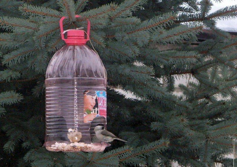 Фото как сделать кормушку для птиц своими руками из бутылки