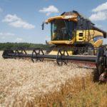 Как проходит уборка зерновых культур?