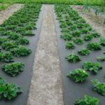 Использование агроволокна. Разновидности и особенности