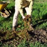 Удобрение сада и огорода осенью