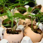 Яичная скорлупа как удобрение сада и огорода