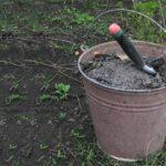 Зола для удобрения посадок, и как это делается?