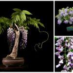 Выращивание экзотических деревьев из семян