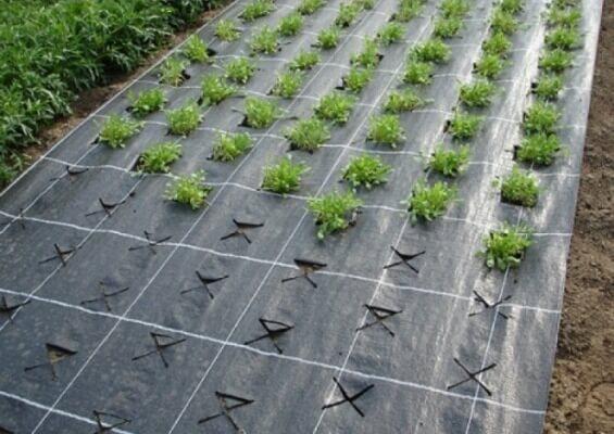 Мульчирующий черный укрывной материал Лутрасил и Спанбонд для защиты от сорняков