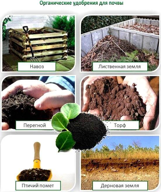 Виды органических удобрений