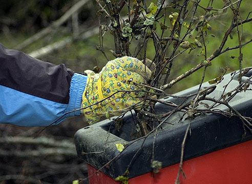 Работать с измельчителем лучше в перчатках