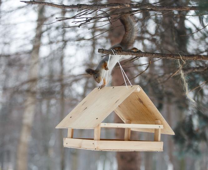 Сделать кормушки для птиц своими руками из картона