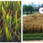 Калийные удобрения: производство и особенности применения