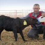 Откорм крупного рогатого скота. Как правильно производить?