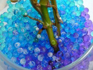 Укоренение растений в аквагрунте