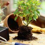 Пересадка растений (практика). Инструкция