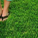 Как посадить газонную траву своими руками. Виды газонной травы — как выбрать