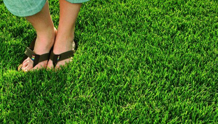 Как посадить газонную траву своими руками