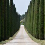 Дерево туя: посадка и уход в открытом грунте, виды и сорта с фото