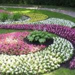 Низкорослые многолетники, цветущие все лето: фото и названия