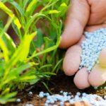Мочевина (карбамид): понятие, состав, инструкция по применению