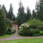Хвойные деревья – ель, пихта, лиственница, сосна, туя, фото, видео
