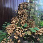 Домашняя грибница: идеи посадки и варианты разведения популярных видов грибов (135 фото)