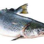 Горбуша: как отличить самку от самца и выбрать рыбу с икрой (фото + видео)