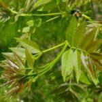 Названия распространенных лиственных деревьев и интересные факты про них