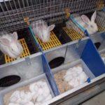 Клетки для кроликов: чертежи с размерами, пошаговая инструкция и виды конструкций