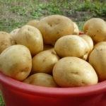 Сорт гала картофель характеристика, фото, урожайность, отзывы