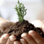 Чернозем (черноземные почвы) — отличие, плодородность