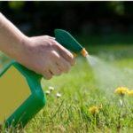 Пестициды: что это такое, виды гербицидов и пестицидов, влияние, особенности применения